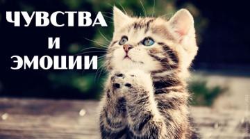 Видеоурок про чувства и эмоции с котиками